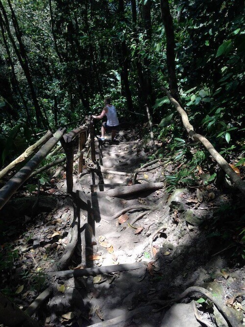 a section of the gros piton hiking trail
