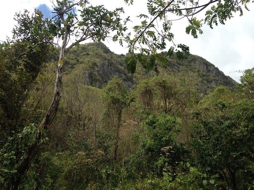 looking up at the saint lucia landscape