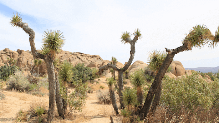 the best vacations in the US - Joshua Tree National Park