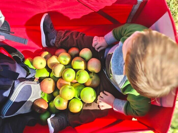 spend a day on Long Island going apple and pumpkin picking with the kids