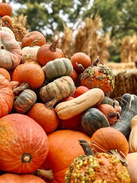 discover the best pumpkin patches in Dallas