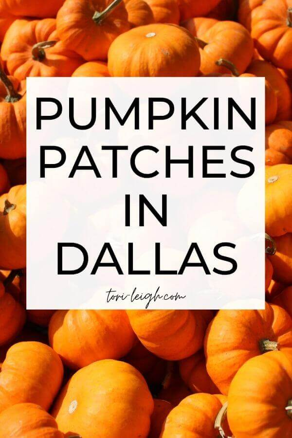 pumpkin patches in Dallas