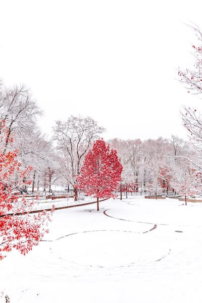 don't miss a quiet side to new york city and stroll through central park this christmas