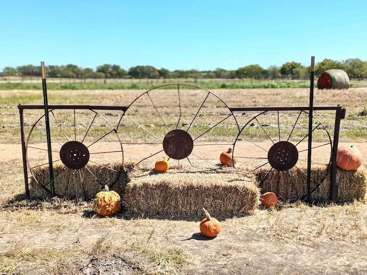 Preston Trail Farms is one of the most popular pumpkin patches north of Dallas